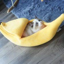 Banane Katze Titelbild