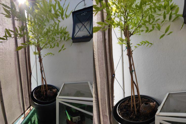 Xiaomi Mi Note 10 Lite Ultraweit vs normal pflanze