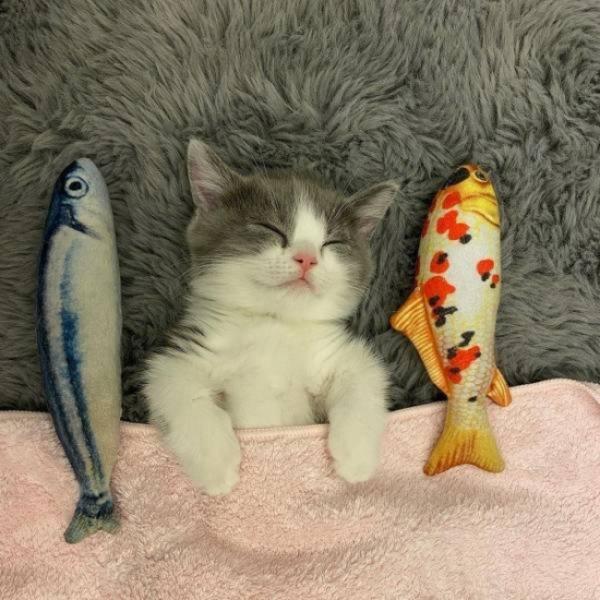 Katze mit Fischkissen