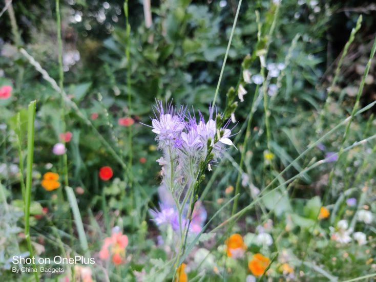 OnePlus Nord Hauptkamera Blume
