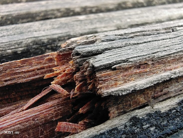 Vivo X51 5G Makro Holz