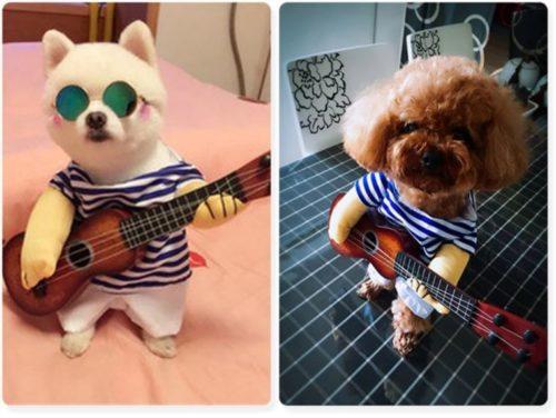 Gitarrenspieler Hunde Kostuem