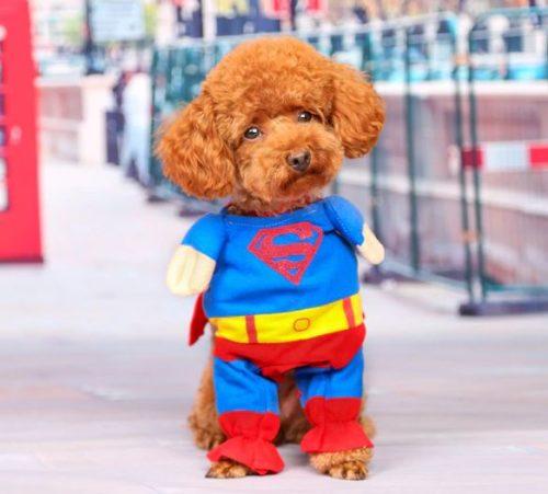 Superman Hunde Kostuem
