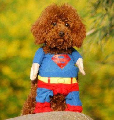 Superman Hunde Kostuem 2
