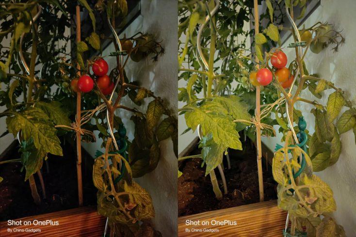 OnePlus Nord 2 5G Nachtmodus Hauptkamera tomaten