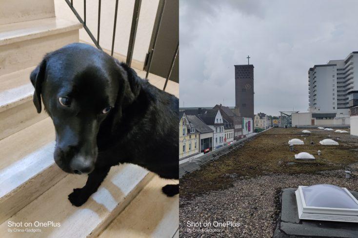 OnePlus Nord CE 5G Dach Hund Hauptkamera