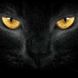 Profilbild von Blacktiger