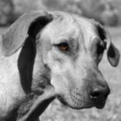 Profilbild von Ridgeback
